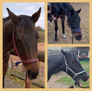 relaxte Pferde bei der Massage